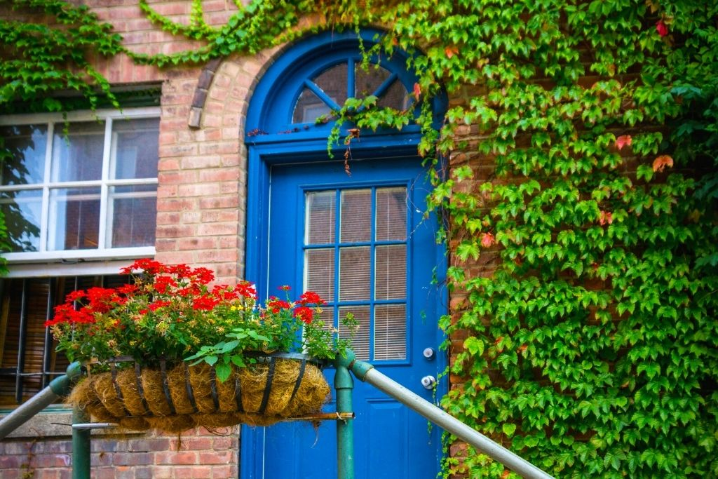 The blur door of an ivy encrusted brick builidng with red flowers out front in Beacon, NY.