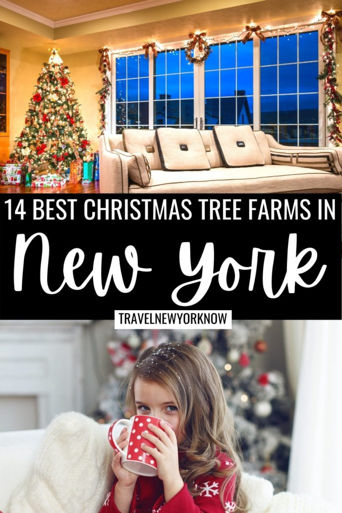 Best Christmas Tree Farms in New York State, Best Christmas Tree Farms in Upstate New York, Best Christmas Tree Farms in Western New York, Best Christmas Tree Farms in Dutchess County, Christmas in New York , New York Christmas.
