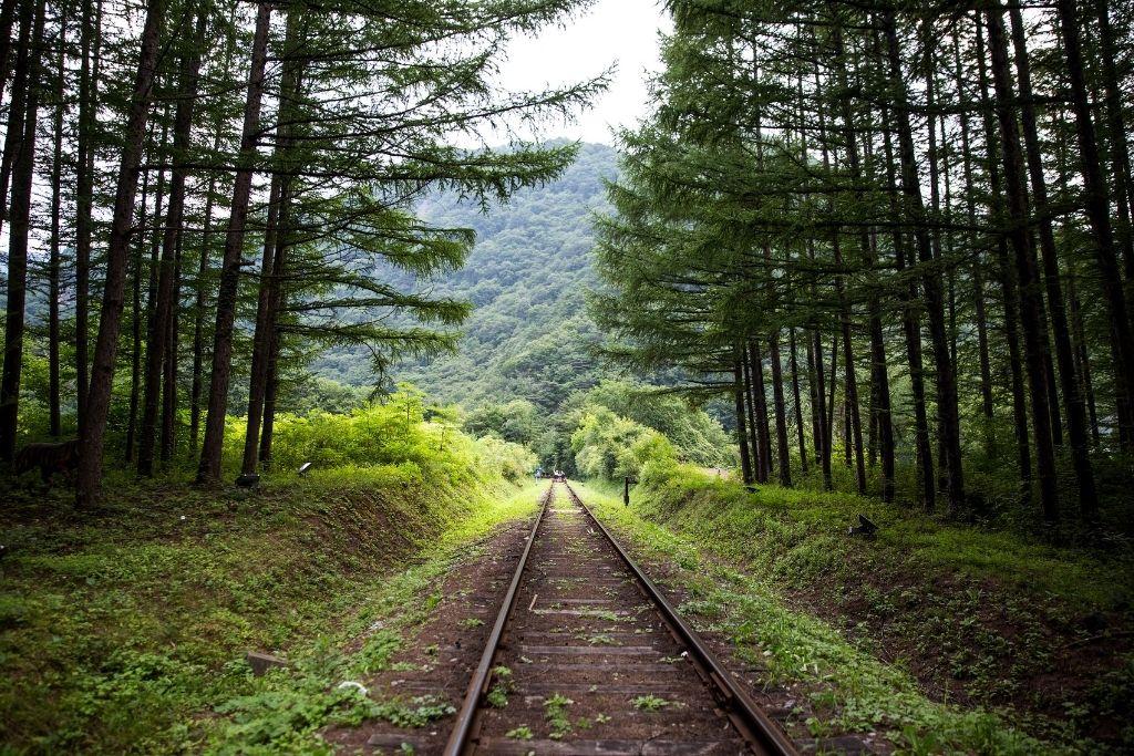 Rail biking through an evergreen forest.