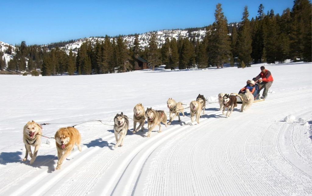 Huskies pulling a sled and their musher through the snow in an evergreen forest.