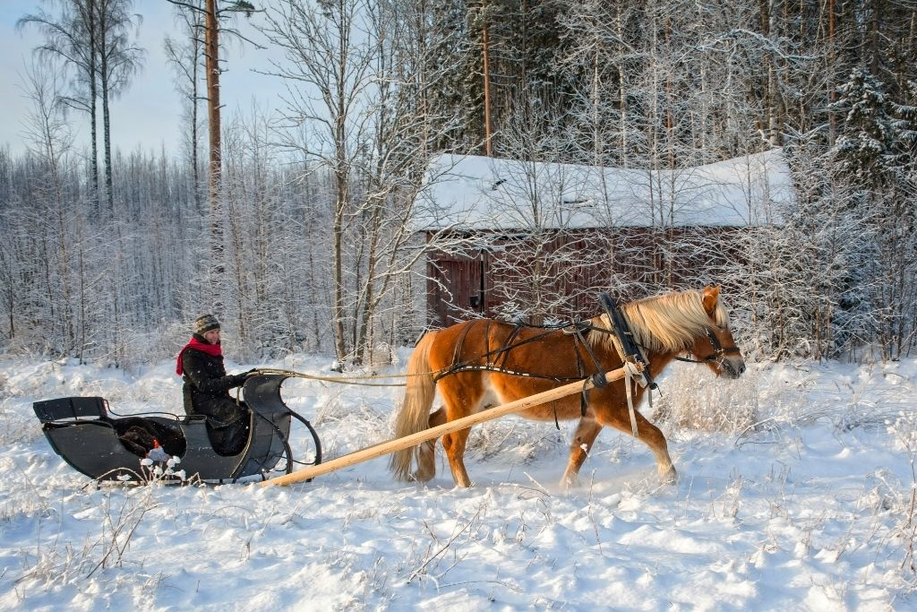 Horse-drawn sleigh going through the snow in the forest with a barn in the background.