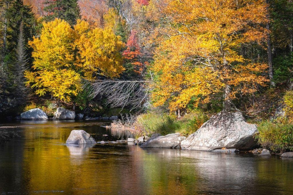 Fall foliage along a stream in Lake Placid, NY.