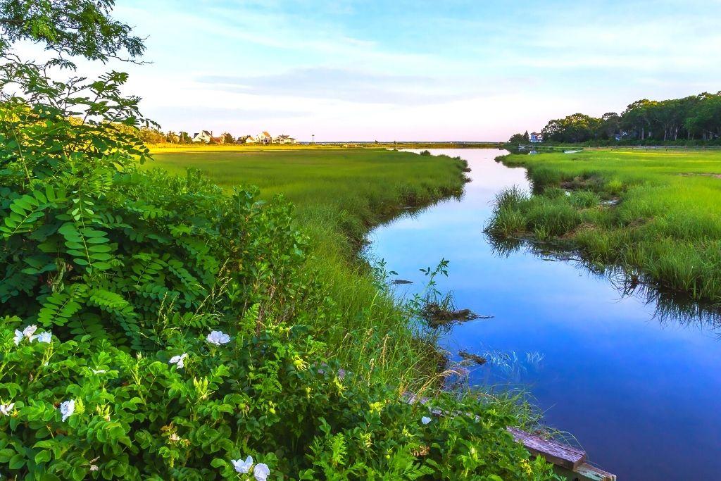 Natural wetlands in new York.