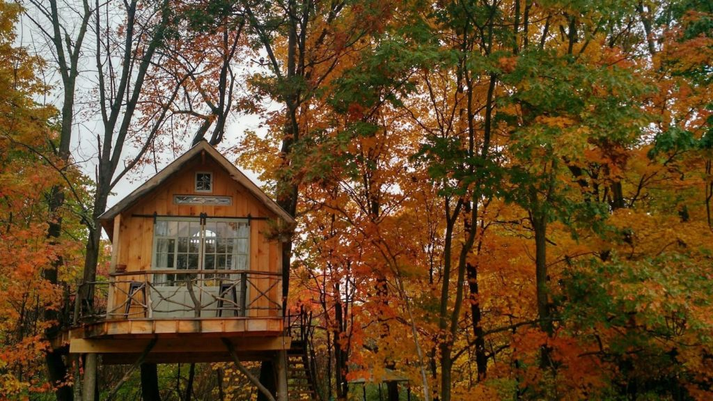 Fall foliage around Whispering Wind, one of many treehouse rentals in NY