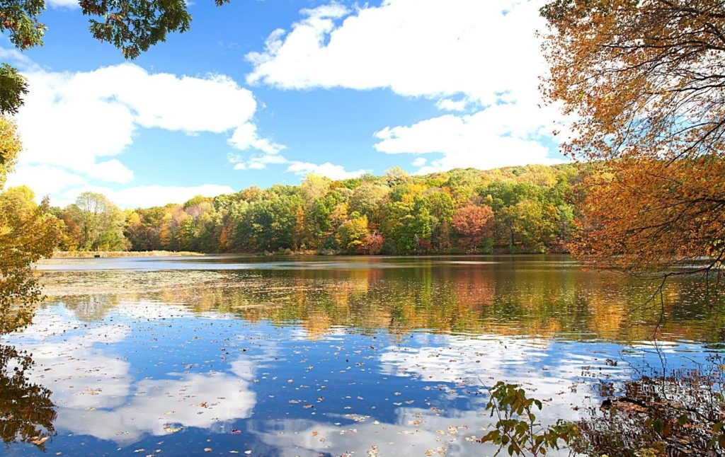 Vibrant fall foliage around a pond in Rockefeller State Park Preserve.