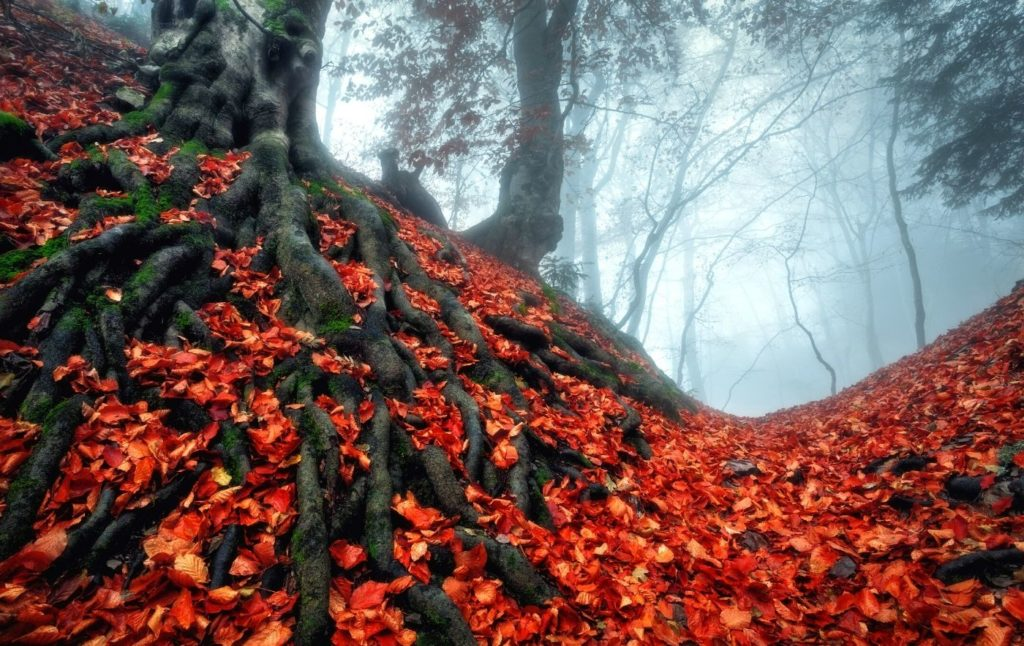 Vibrant fall foliage amongst spooky trees in a park in Sleepy Hollow, NY.